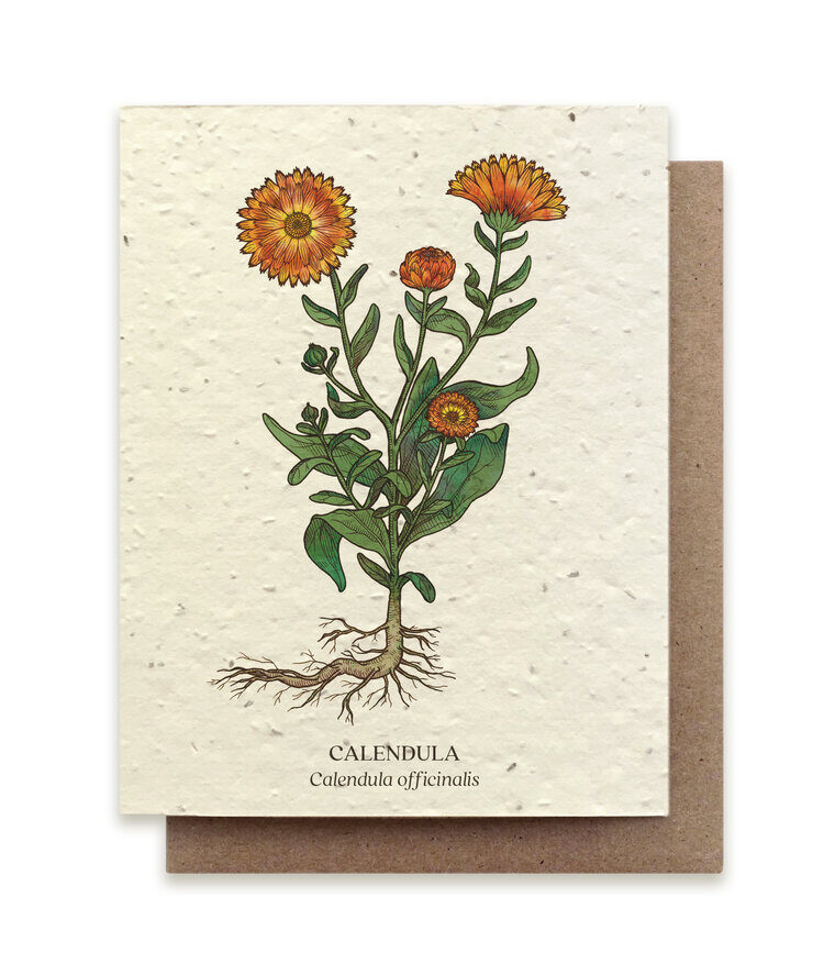 Medicinal Plants Card Set - Plantable Seed Paper