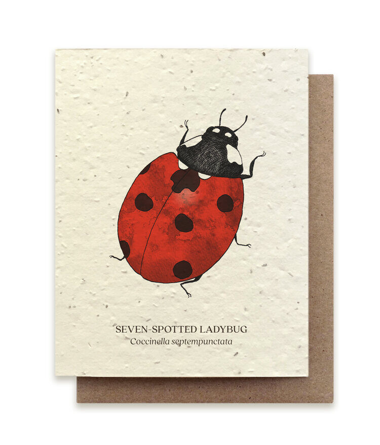 Insect Card Set - Plantable Seed Paper