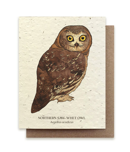 Northern Saw-Whet Owl Plantable Card