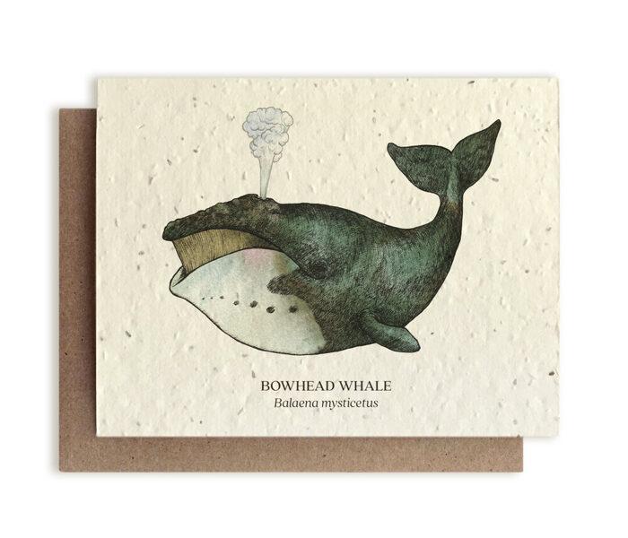 BOWHEAD WHALE - Balaena Mysticetus- PLANTABLE SEED CARD